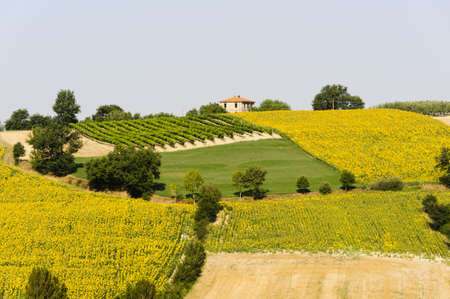 Country landscape in Umbria near Todi (Perugia, Italy) at summer photo