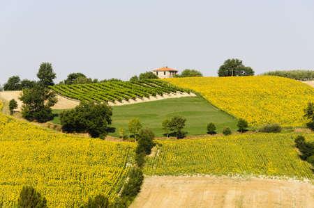 Paesaggio di campagna in Umbria nei pressi di Todi (Perugia, Italia) in estate Archivio Fotografico - 12350526