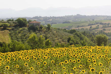 Country landscape in Umbria near Todi (Perugia, Italy) at summer