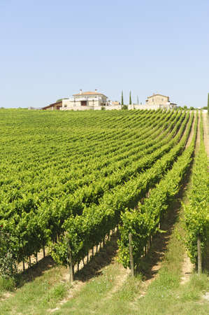 Farm in Umbria (Italy) at summer with vineyard