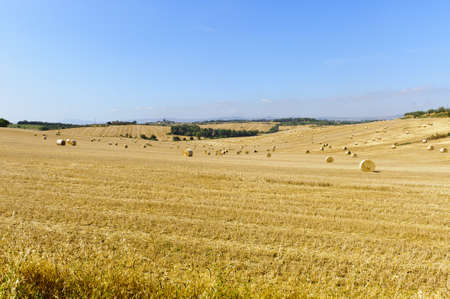Landscape in Val di Chiana (Arezzo, Tuscany, Italy): cultivated fields at summer photo