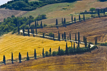 val dorcia: Famous winding road with cypresses in Val dOrcia (SIena, Tuscany, Italy) at summer Stock Photo