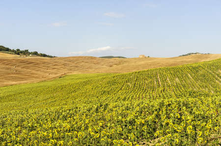 val dorcia: Typical landscape in Val dOrcia (Siena, Tuscany, Italy) at summer