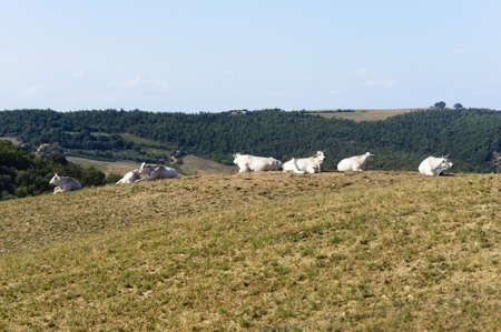 val d orcia: Landscape in Val d Orcia