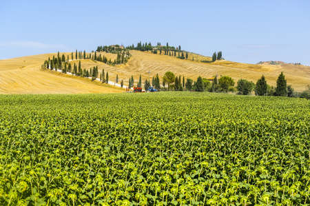 val d orcia: Typisch landschap in Val d Orcia