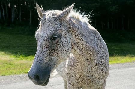appennino: Horse at pasture in the Appennino Tosco-Emiliano, at Passo di Pradarena (Emilia-Romagna, Tuscany, Italy)