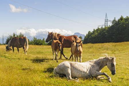 appennino: Horses at pasture in the Appennino Tosco-Emiliano, at Passo di Pradarena (Emilia-Romagna, Tuscany, Italy)
