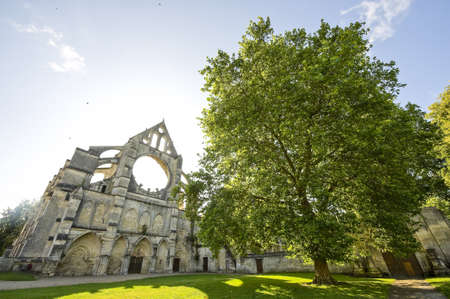 Abbey of Longpont (Aisne, Picardie, France)  - Ruins of the abbey church, facade, and big tree photo