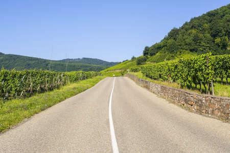 andlau: Road in the vineyards of Alsace (France) near Andlau (Bas-Rhin)