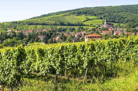 andlau: Andlau (Bas-Rhin, Alsace, France) - The village and its vineyards