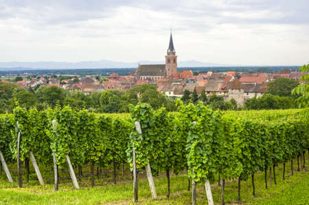 Bergheim (Bas-Rhin, Alsace, France) Panoramic view with vineyards at summer Stock Photo