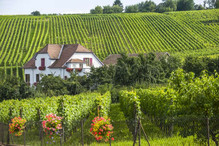 Hunawihr (Bas-Rhin, Elzas, Frankrijk) - Witte huis en wijngaard in de zomer Stockfoto