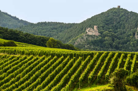 Hunawihr (Bas-Rhin, Alsace, France) - Ruins of ancient castle and vineyard at summer photo