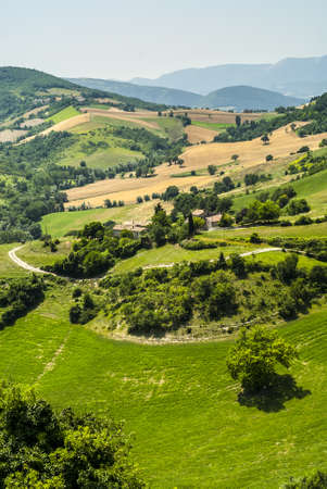 Marches  Italy  - Landscape at summer between Sassoferrato and Arcevia photo