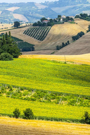Marches  Italy  - Panoramic view near Arcevia at summer photo