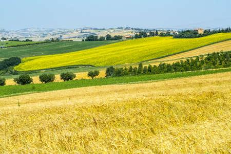 Jesi - Cingoli (Macerata, Marche, Italy) - Landscape at summer, with sunflowers Stock Photo