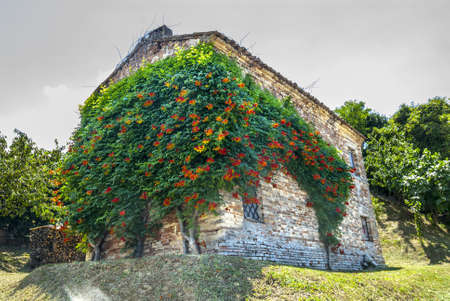 recanati: Marches (Ancona, Italy) - Old house with plant in flower