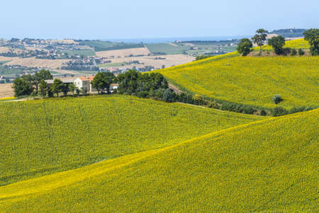 Marches (Italy) - Landscape between Potenza Picena and Montecosaro, near Macerata, at summer photo