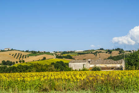 Landscape near Fermo (Marches, Italy) - Sunflowers and old building photo