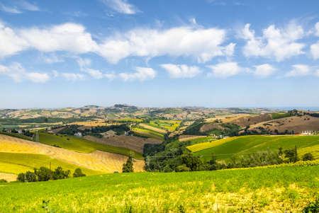 Marches (Italy) - Landscape with sunflowers near Fermo and Monterubbiano at summer Stock Photo
