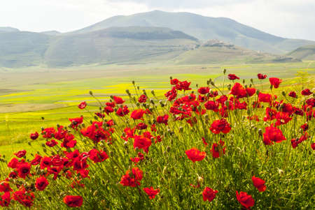 umbria: Castelluccio di Norcia (Perugia, Umbria, Italy) - Landscape in the Monti Sibillini Park at summer Stock Photo