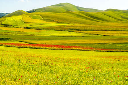 castelluccio di norcia: Castelluccio di Norcia (Perugia, Umbria, Italy) - Landscape in the Monti Sibillini Park at summer Stock Photo