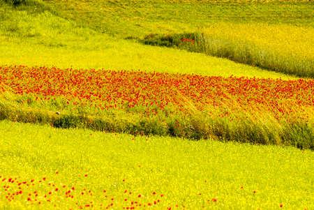 Castelluccio di Norcia (Perugia, Umbria, Italy) - Landscape in the Monti Sibillini Park at summer Stock Photo - 17999147