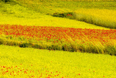 sibillini: Castelluccio di Norcia (Perugia, Umbria, Italy) - Landscape in the Monti Sibillini Park at summer Stock Photo