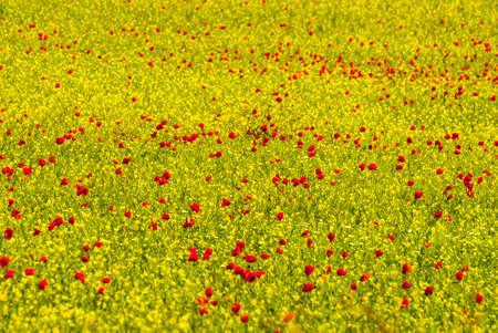 Castelluccio di Norcia (Perugia, Umbria, Italy) - Landscape in the Monti Sibillini Park at summer Stock Photo - 17999154