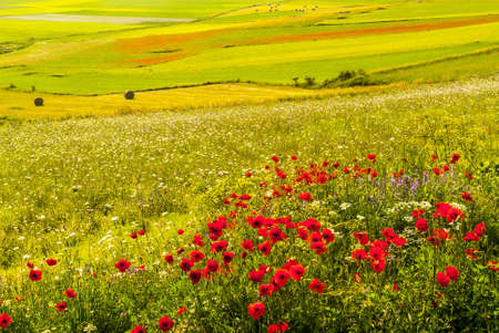 Castelluccio di Norcia (Perugia, Umbria, Italy) - Landscape in the Monti Sibillini Park at summer photo