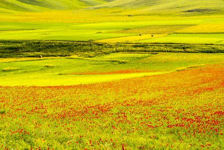 Castelluccio di Norcia (Perugia, Umbria, Italy) - Landscape in the Monti Sibillini Park at summer Stock Photo - 18058772