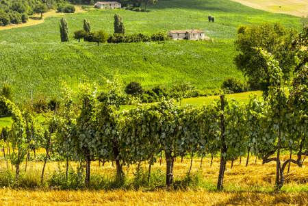 Vigneti tra Rieti e Terni (Lazio, Umbria, Italia) in estate Archivio Fotografico - 18413246