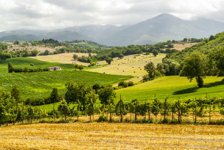terni day: Vineyards between Rieti and Terni (Lazio, Umbria, Italy) at summer Stock Photo