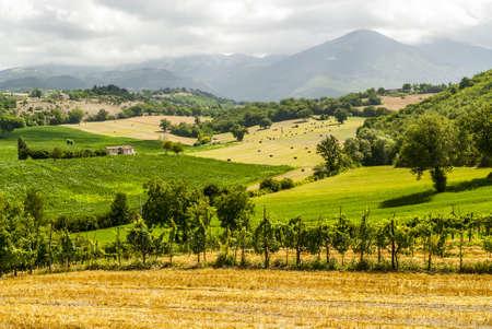 terni day: Vineyards between Rieti and Terni (Lazio, Umbria, Italy) at summer Stock Photo