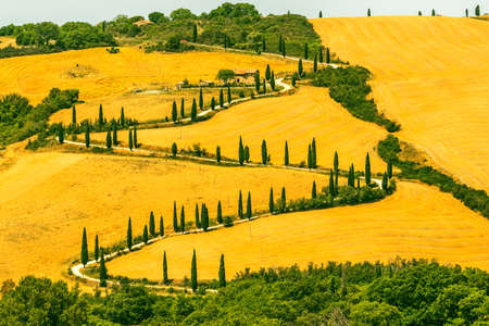 Landscape in Val dOrcia (Siena, Tuscany, Italy) at summer photo