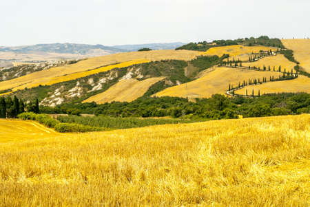 orcia: Landscape in Val d Orcia