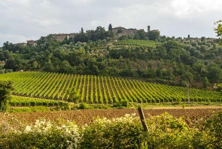 sant'antimo: Landscape with vineyards near SantAntimo (Siena, Tuscany, Italy) at summer