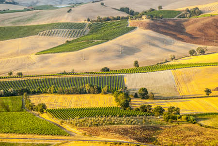 Panoramic view from Montalcino (Siena, Tuscany, Italy) in a summer evening photo