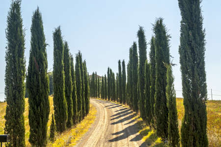 montalcino: Country road with cypresses on the hills near Montalcino (Siena, Tuscany, Italy)