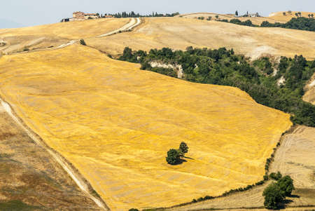 Crete senesi, characteristic landscape in Val d'Orcia (Siena, Tuscany, Italy) along the road from Asciano to Torre a Castello Stock Photo - 19141397
