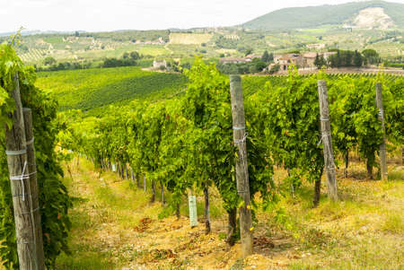 Chianti (SIena, Tuscany, Italy) - Vineyards at a summer afternoon photo