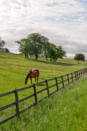 Vaud (Switzerland) - Horses at pasture in a  summer morning photo