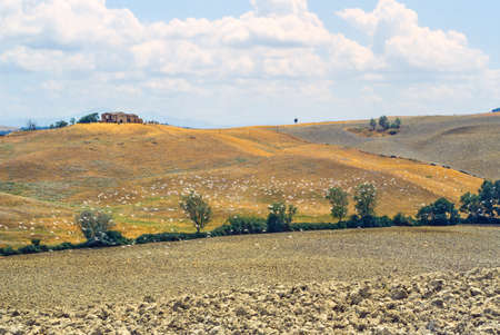 val d      orcia: Crete senesi, characteristic landscape in Val d Orcia Stock Photo
