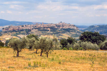 terni day: Orvieto (Terni, Umbria, Italy), panoramic view and olive trees