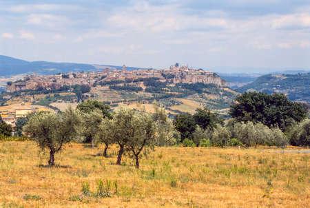 terni day: Orvieto (Terni, Umbria, Italy), panoramic view and olive trees