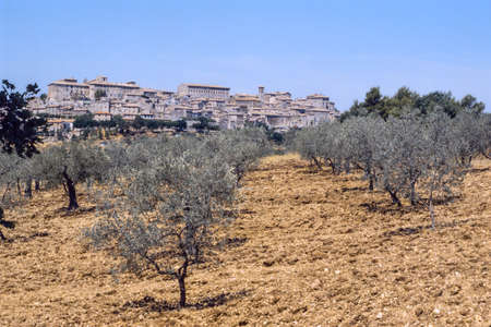 terni day: Lugnano in Teverina (Terni, Umbria, Italy): Old town and olive trees Stock Photo