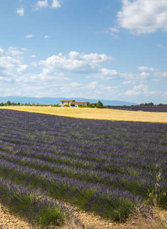 Plateau de Valensole (Alpes-de-Haute-Provence, Provence-Alpes-Cote dAzur, France(, country house and field of lavender photo