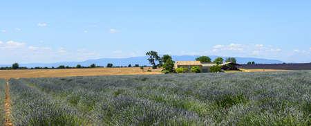Plateau de Valensole (Alpes-de-Haute-Provence, Provence-Alpes-Cote dAzur, France(, country house and field of lavender photo