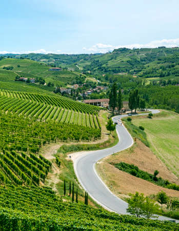 Langhe (Asti, Cuneo, Piedmont, Italy) - Landscape at summer with vineyards Stock Photo - 22260617