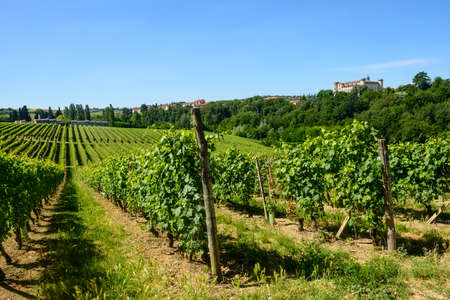Landscape at summer with vineyards and castle photo